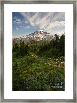 Rainier And Majestic Meadows Of Wildflowers Framed Print by Mike Reid