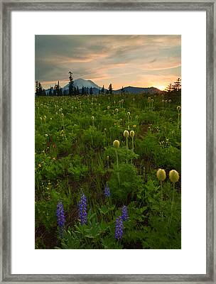 Rainier Wildflower Light Framed Print