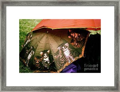 Raining Cats  Framed Print by Steven Digman
