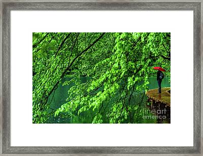 Raining Serenity - Plitvice Lakes National Park, Croatia Framed Print