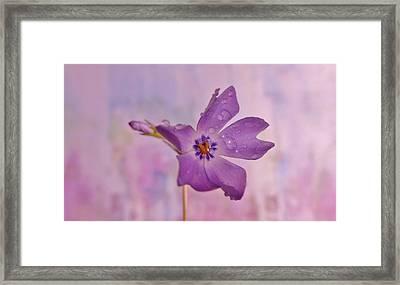 Raining Violet Framed Print by Barbara St Jean