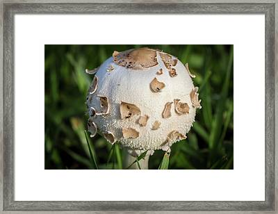 Rain's Child 2 Framed Print