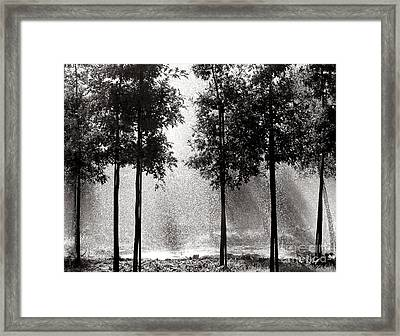 Rainshower Framed Print by Olivier Le Queinec