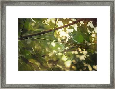 Rainy Autumn Leaves Framed Print by Thubakabra