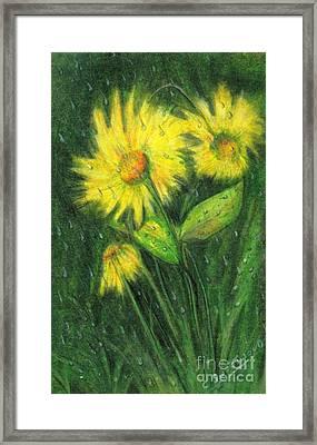 Rainy Daisy Framed Print by Carol Sweetwood