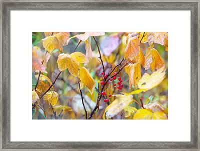 Rainy Day Berry Framed Print