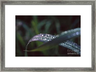 Framed Print featuring the photograph Rainy Day by Edward R Wisell