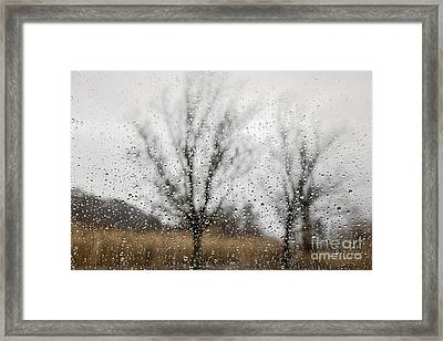 Rainy Day Framed Print by Elena Elisseeva