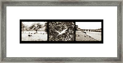 Rainy Day Geese Framed Print by Bill Cannon