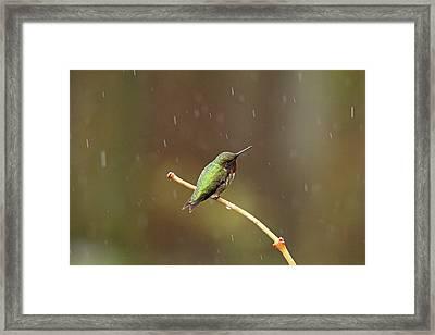 Rainy Day Hummingbird Framed Print