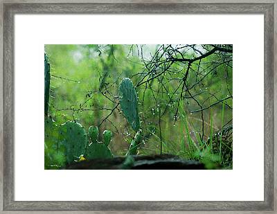Rainy Day In Central Texas Framed Print by Travis Burgess