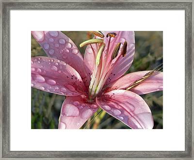Rainy Day Lily Framed Print by Pamela Patch