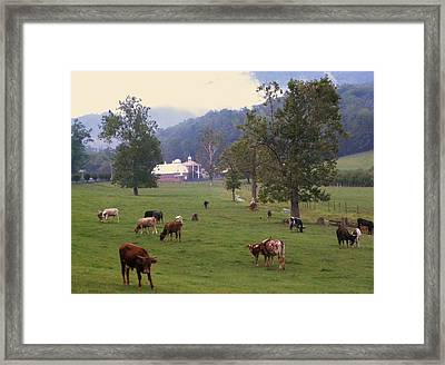Rainy Day Longhorns Framed Print by Cindy Gacha