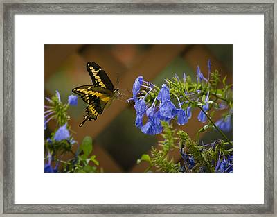 Rainy Day Lunch Framed Print