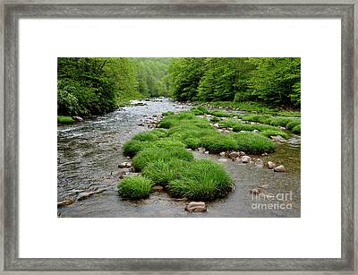 Rainy Day On Williams River  Framed Print by Thomas R Fletcher
