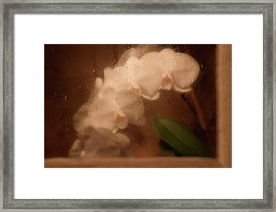 Rainy Day Orchid Framed Print by Tom Mc Nemar