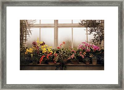 Rainy Day Orchids Framed Print by Jessica Jenney