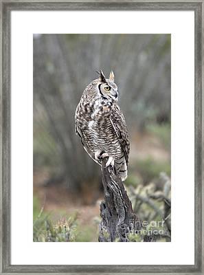 Rainy Day Owl Framed Print
