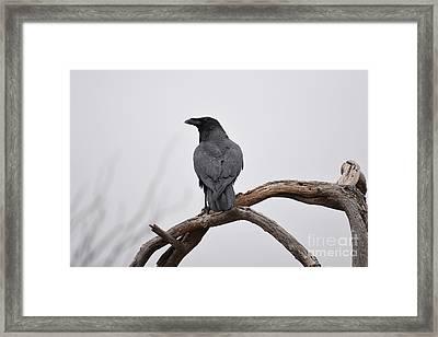 Rainy Day Raven Framed Print