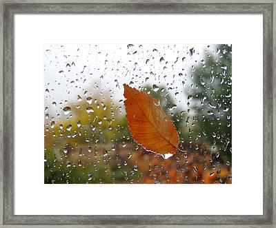 Rainy Day Visitor Framed Print