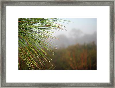 Rainy Days And Mondays Framed Print