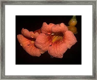 Rainy Flower Framed Print