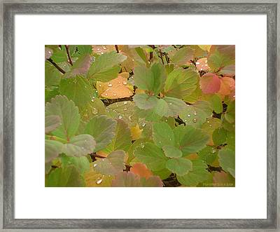Rainy Morning Framed Print