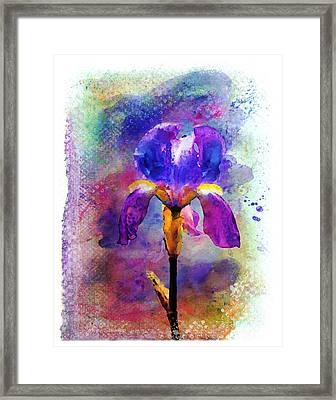 Rainy Weekend Iris Framed Print by Moon Stumpp