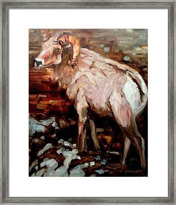 RAM Framed Print by Brian Simons