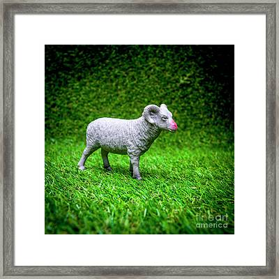 Ram Figurine Framed Print by Bernard Jaubert