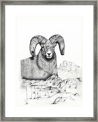 Framed Print featuring the drawing Ram by Mayhem Mediums