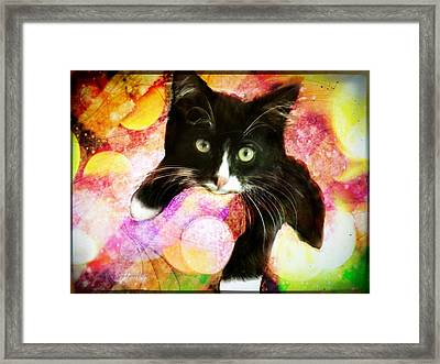 Rama The Miracle Cat Framed Print
