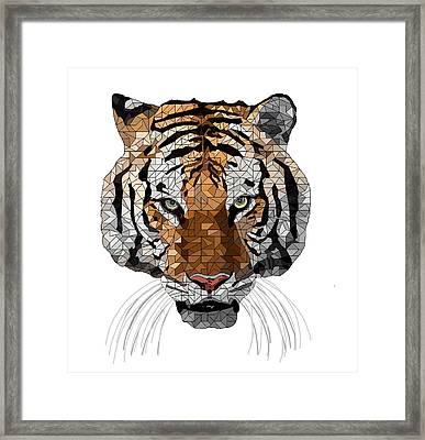 Rama The Tiger Framed Print by David Smith