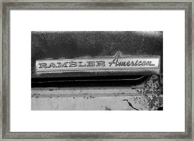Rambler American Framed Print by Audrey Venute