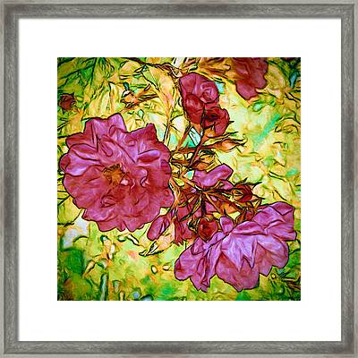 Ramblin' Rose Framed Print by John K Woodruff