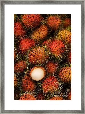 Rambutan Framed Print by Gloria & Richard Maschmeyer - Printscapes