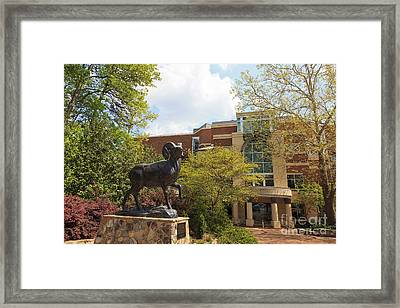 Ramses The Bighorn Ram Sculpture Framed Print