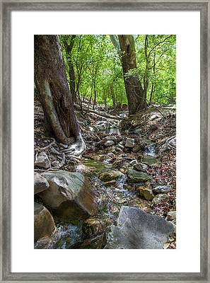Ramsey Canyon Preserve Framed Print