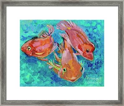 Ramshead Goldfish Framed Print by Jan Bennicoff