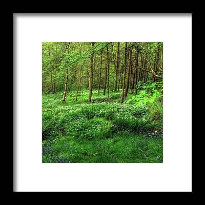 Trail Framed Prints