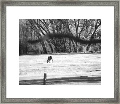 Ranch Horse In The Fields Framed Print