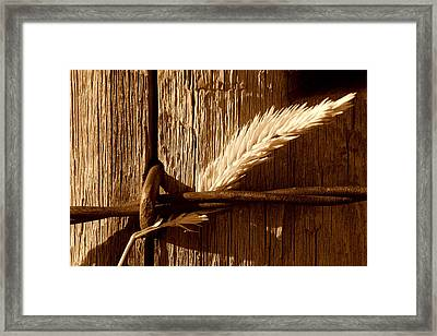 Ranch Life.. Framed Print