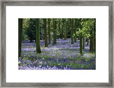 Randan Woods Framed Print