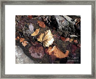 Random Leaves At Richland Ceek Framed Print by Steve Grisham