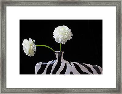 Ranunculus In Black And Whie Vase Framed Print by Garry Gay