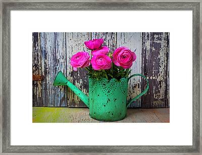 Ranunculus In Green Watering Can Framed Print by Garry Gay