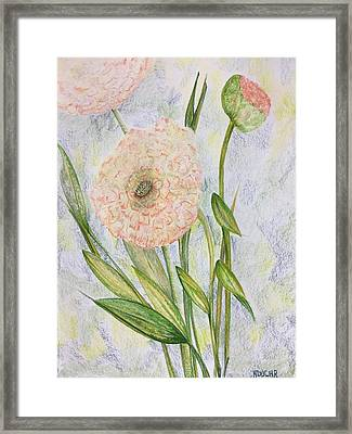 Framed Print featuring the drawing Ranunculus by Norma Duch