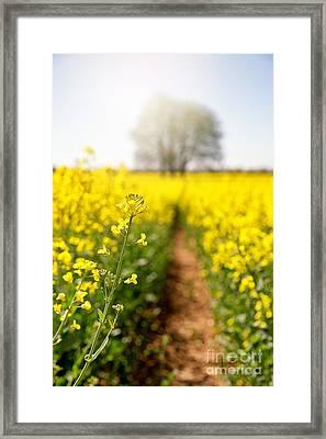 Rape Flower Selective Focus Framed Print by Jane Rix