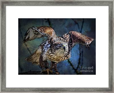 Raptor Hunter Framed Print