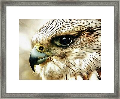 Raptor Framed Print by Jacky Gerritsen